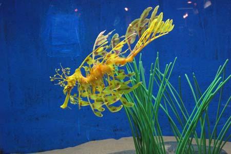 عالم تحت الماء ـ لالنكاوي، ماليزيا