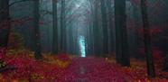صورة الأسبوع: أجواء الخريف في غابة بهاملن الألمانية