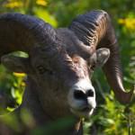حديقة جلاسير الأمريكية: تجتمع فيها تضاريس وحيوانات العالم gla_008-150x150.jpg