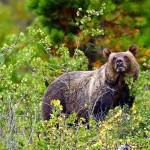 حديقة جلاسير الأمريكية: تجتمع فيها تضاريس وحيوانات العالم gla_009-150x150.jpg