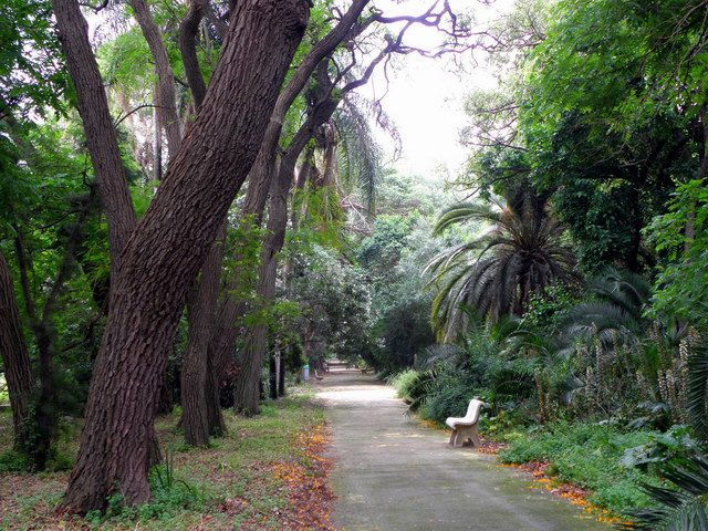تمازج بين النباتات القصيرة والأشجار الطويلة