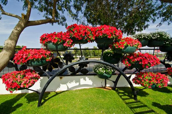 بالصور: حديقة العين براديس.. جنة من الزهور