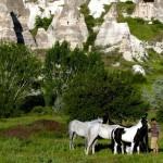 رحلات الخيول التي تأخذ السائح في جولة رائعة