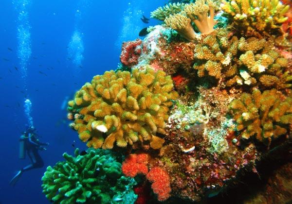الغوص في أعماق جزر بالاو