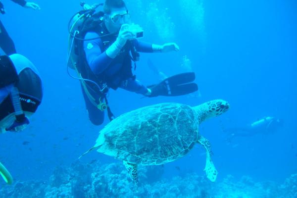 هواية التصوير تحت الماء تجذب الكثير من الغواصين بالبحر الأحمر