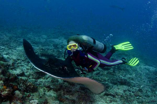 غواص مع حيوان ماربيل رييز بجزيرة كوكوس بكوستاريكا