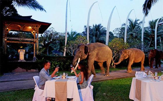 فندق إندونيسي يعيش نزلاؤه وسط 30 فيلًا مهددًا بالانقراض
