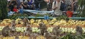 بالصور والفيديو .. مدينة تايلاندية تقيم مهرجانا للقرود