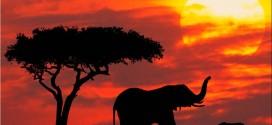 تأشيرة سياحية واحدة بين كينيا، أوغندا و رواندا