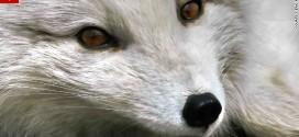 السي إن إن.. بالصور.. كيف يمكن أن تلتقط أجمل صور الحياة البرية حول العالم