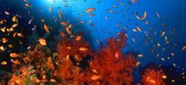 متحف تحت الماء في البحر الأحمر بمصر لجذب 300 ألف سائح