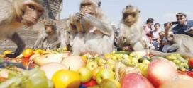 مهرجان سنوي لتكريم القرود في تايلاند