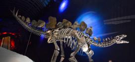عرض هيكل عظمي نادر لديناصور عمره 150 مليون عام في لندن