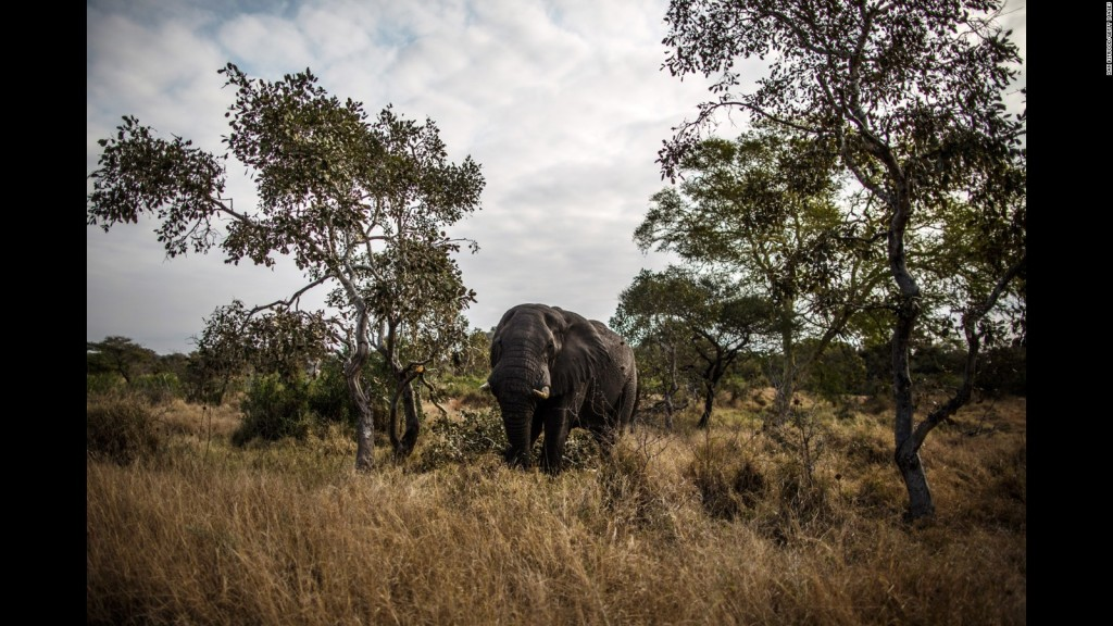 حديقة كروغر الوطنية Kruger National Park في جنوب إفريقيا