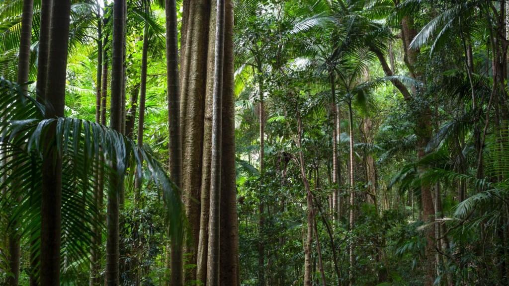 غابات غوندوانا المطيرة  Gondwana Rainforests في أستراليا