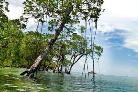 جزيرة سيبو ـ جوهور، ماليزيا