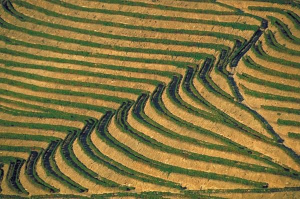 حقول الأرز في جزيرة بالي، إندونيسيا