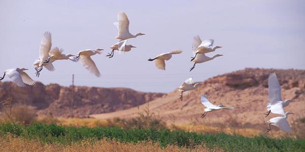 واحة موط في محافظة الوادي الجديد، مصر
