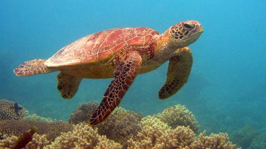 الحاجز المرجاني العظيم، بحر المرجان ـ أستراليا