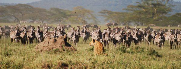 سرينجيتي بارك، تنزانيا