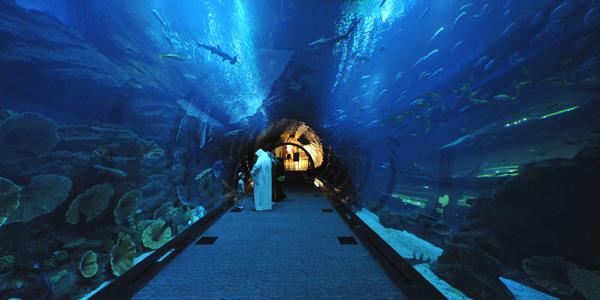 الانبوب الزجاجي في دبي اكواريوم