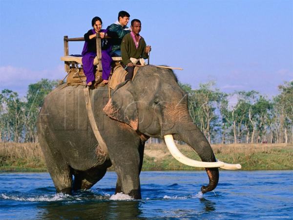 ركوب الفيل.. من أشهى مُغامرات السّفاري في النيبال