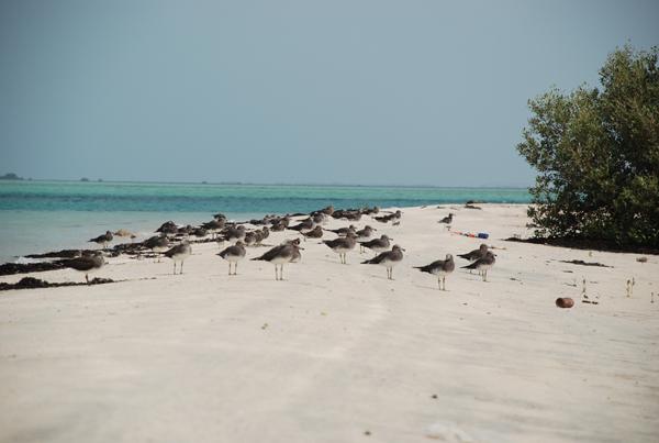 تحتضن هذه الجُزر نماذج متنوّعة ومُختلفة من الطيور والكائنات البريّة والبحريّة