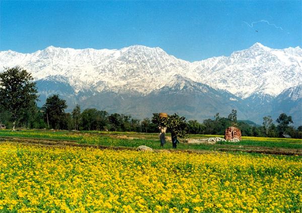 أجمل مشاهد الأفلام الهنديّة تصوّر بين الزهور والجبال المكسوّة بالثلج في هيماشال براديش