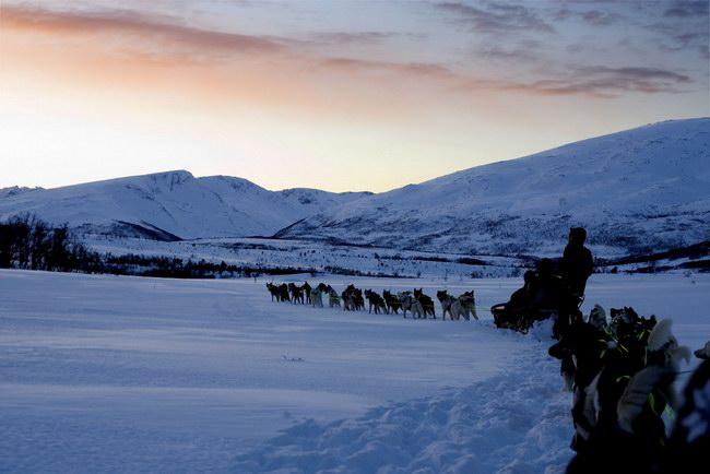 رحلات الـ Husky التي تجرها كلاب الإسكيمو