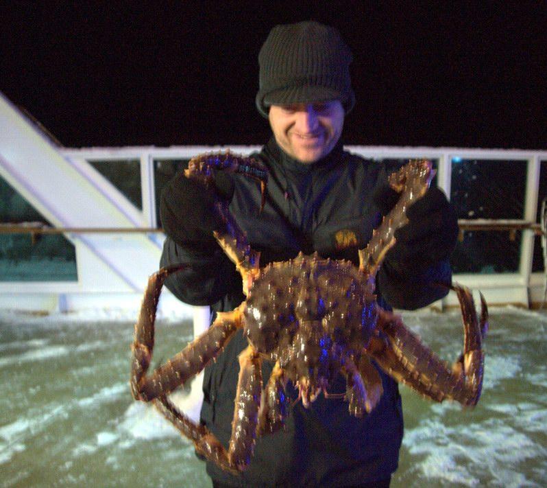 الكابوريا العملاقة Red King Crab