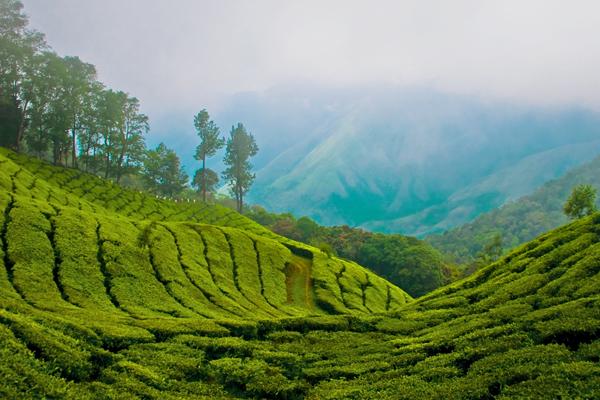 التلال الخضراء في كيرالا، الهند