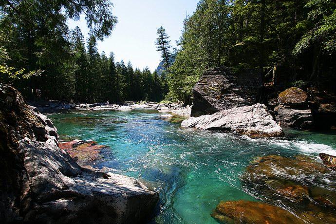 أحد الأنهار العديدة وعلى ضفافها أشجار الصنوبر