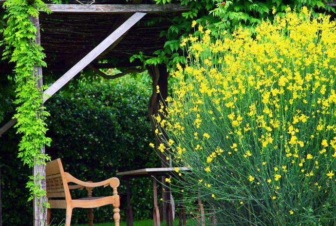 جلسات وسط النباتات العطرية والأشجار المثمرة