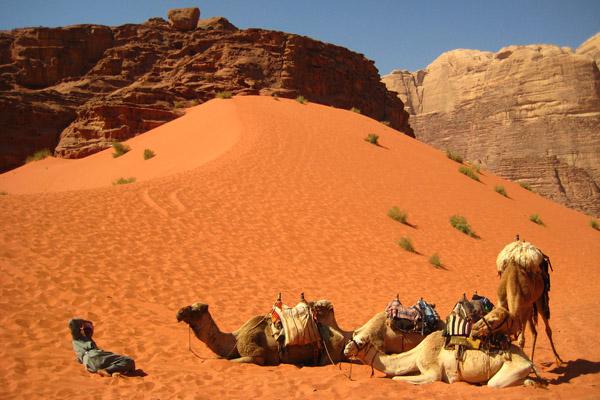 رحلات السفاري في الصحراء