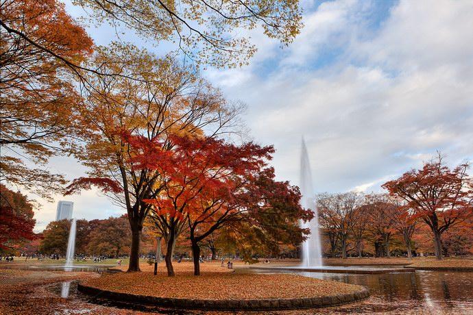 تتحول الأشجار للون الأصفر والبرتقالي في فصل الخريف