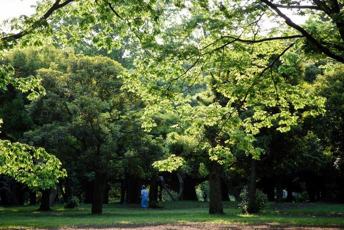 غابات كثيفة تغطي سماء المنتزه