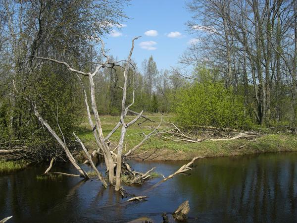 """أهلت الطبيعة الجميلة لاتفيا للترشح للقب """"أجمل بلد في العالم"""""""