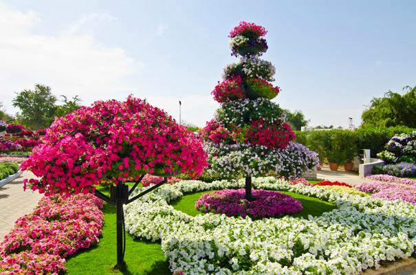 """في """"العين براديس"""" أشجار من سلات الورود المعلقة"""