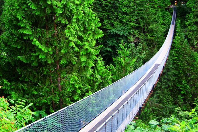 جسر كابيلانو المعلق وسط الغابات الكندية