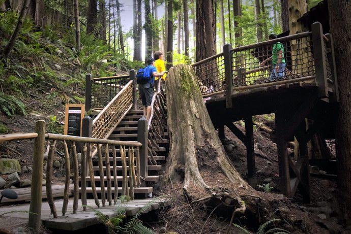 بداية الدخول لمغامرة Treetops