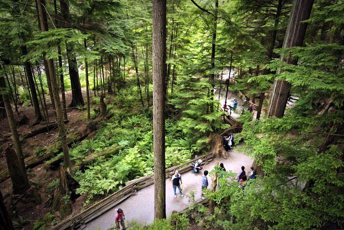 نظرة عامة على الغابة