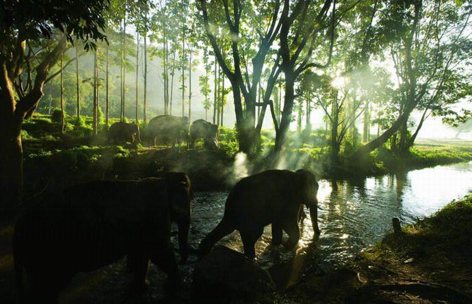 أفيال مزرعة باتارا قرب النهر