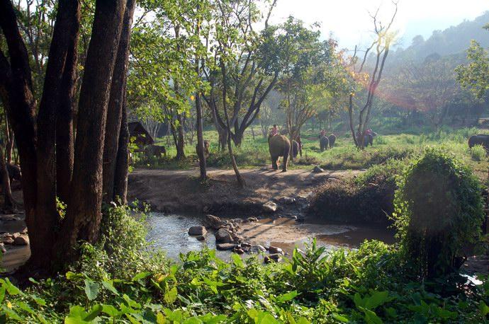 مزرعة باتارا على مساحة واسعة وغابات كثيفة