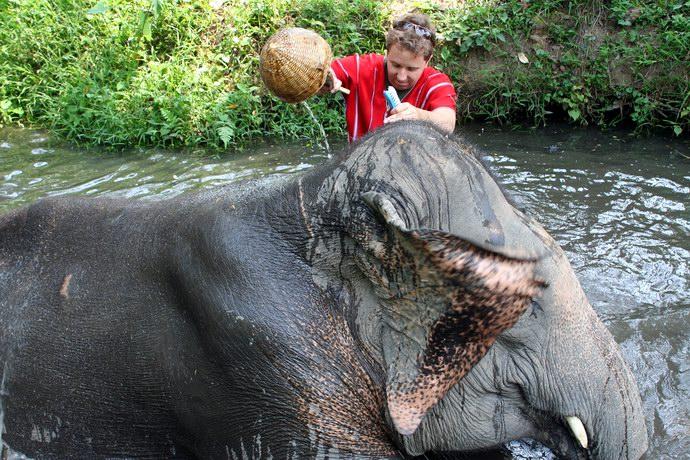 الإستحمام مع الفيل إحدى أنشطة البرنامج