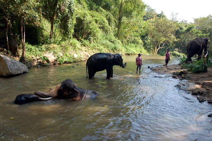 أفيال تستحم في أحد ممرات المزرعة المائية