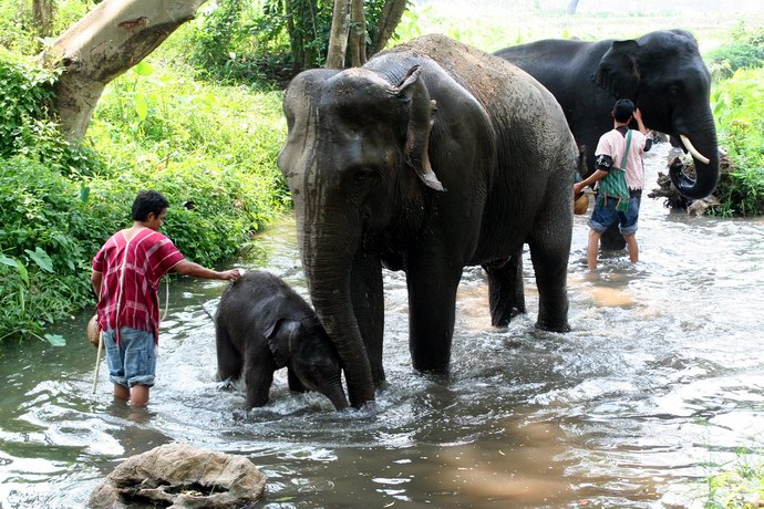 أفيال صغيرة ولدت في المزرعة