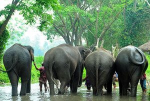 يوم كامل مع الأفيال في مزرعة باتارا التايلاندية
