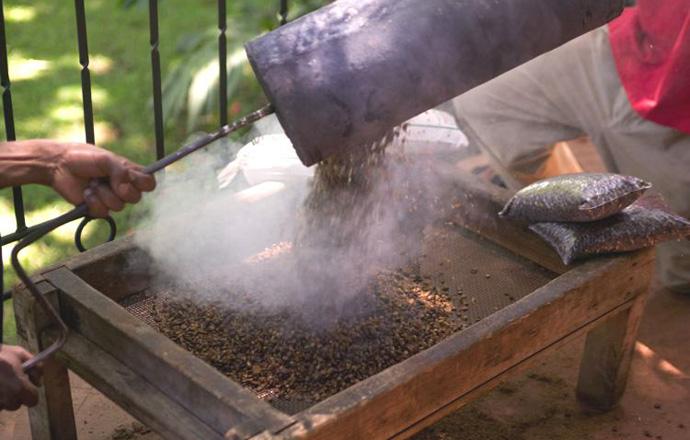 تحميص حبوب القهوة كل يوم في مزرعة جيبس