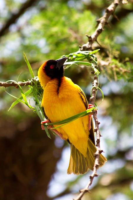 تضم المزرعة 200 نوع من الطيور المختلفة