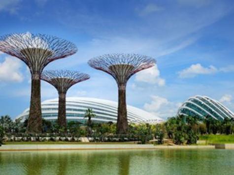 الأشجار الفولاذية العملاقة